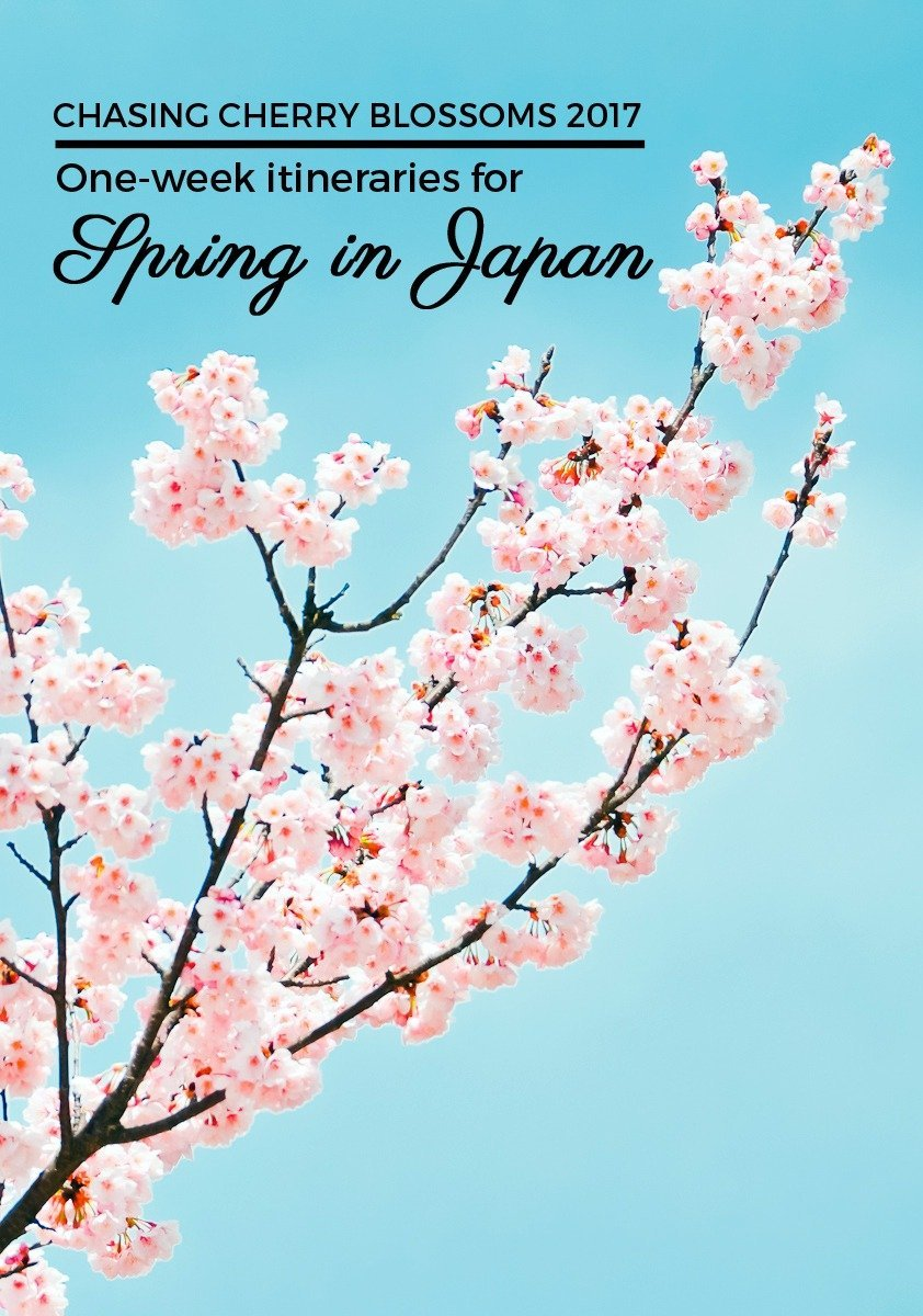 There's nothing quite as beautiful as the sight of a thousand cherry trees bursting with pale pink flowers come springtime in Japan. These one-week itineraries will help you plan and navigate your way around Hanami 2017. Click through to find out when and where to see the cherry blossoms in Japan this coming spring!